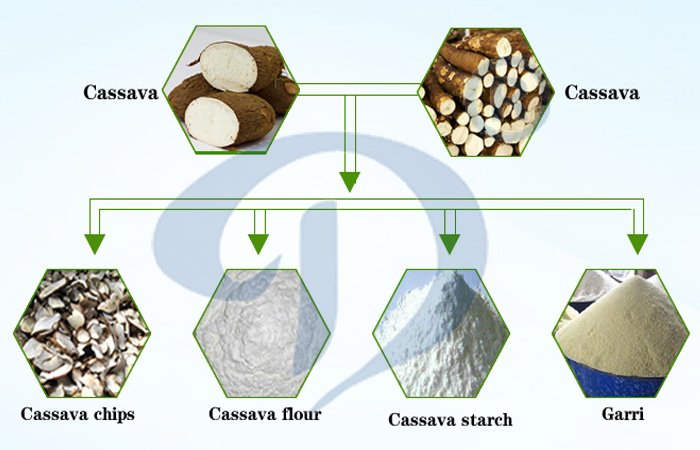 cassava tuber can be produced many food