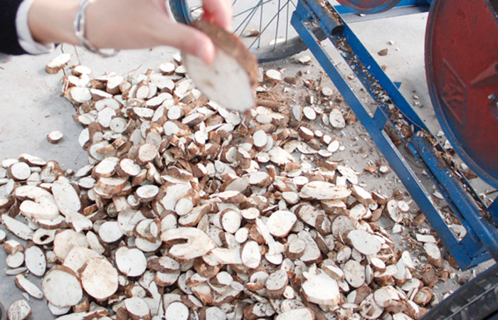 Cassava chips production in Nigeria