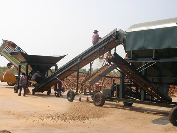 Commercial cassava production and processing