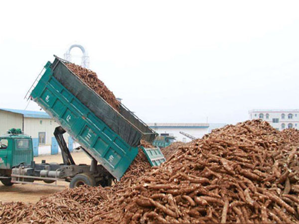Start the commerical cassava processing in Africa is very important